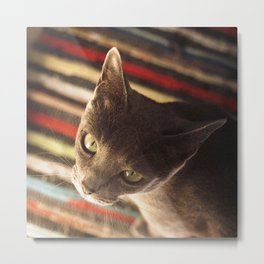 gaze of a cat Metal Print