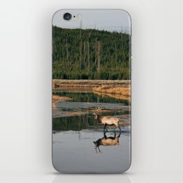 Bull Elk Crossing a River in Yellowstone iPhone Skin