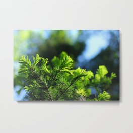 Pine branch background Metal Print