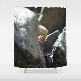 Sea Snails Grazing on Ocean Weathered Rocks with Barnacles Shower Curtain