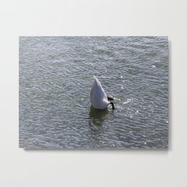 Swan in the sea Metal Print