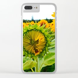 Sunflower Prepares to Unfold Itself Clear iPhone Case