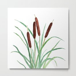 cattails plant Metal Print