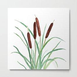 cattails plant Metal Print