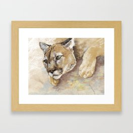 Captivated Mountain Lion Framed Art Print