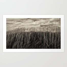 Beach Grass in Black & White Art Print