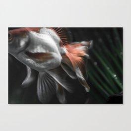 Ryukin Canvas Print