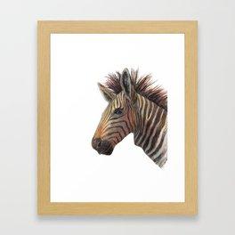 Zebra Drawing Framed Art Print
