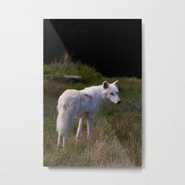 Canis Lupus Arctos III Metal Print