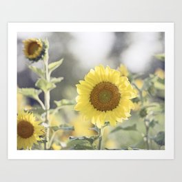 Sunflower Flower Photography, Yellow Sunflowers Floral Nature Photography Art Print