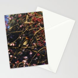 Robin in Cherry Tree Stationery Cards