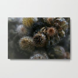 Prickly points Metal Print