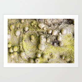 Tree Bark Close up with Burl Growth Art Print