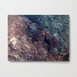 Lined Surgeonfish Metal Print