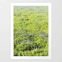 Texas Bluebonnet Field Art Print