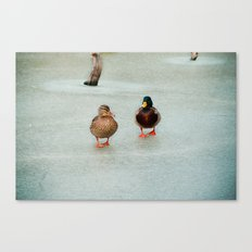 Ducks Canvas Print