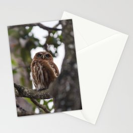 Birds from Pantanal Caburé Stationery Cards