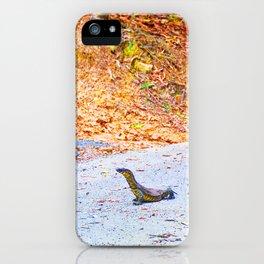 Goanna on a road in Australia iPhone Case