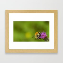 a bee in the flower Framed Art Print