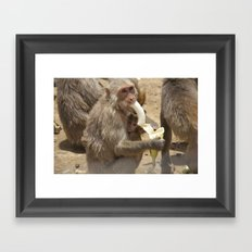 Breakfast for Monkeys  Framed Art Print