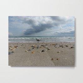 Seagull Crossing, Hutchinson Island, Florida Metal Print