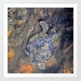 SEA TURTLE-Old Man of the Sea Art Print