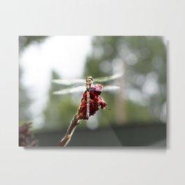 My Dragonfly Wings Metal Print