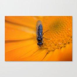 Black Hoverfly on Marigold Canvas Print