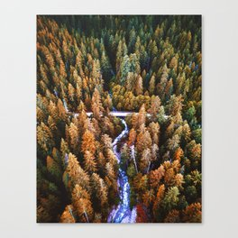 forest aerial view in yosemite Canvas Print