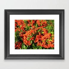 Berry Berry! Framed Art Print