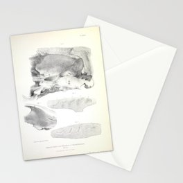 The Zoology of the Voyage of H.M.S. Beagle 1840 - Fossil Mammalia - Scelidotherium Dentition Stationery Cards