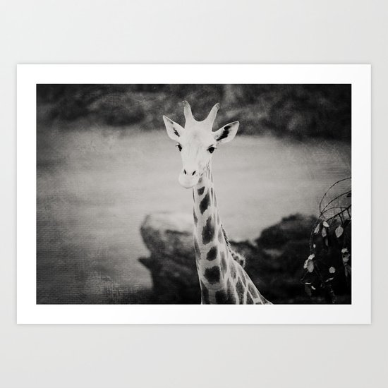 The Curious Giraffe Art Print