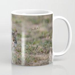 Multicolor cat is playing hide and seek Coffee Mug