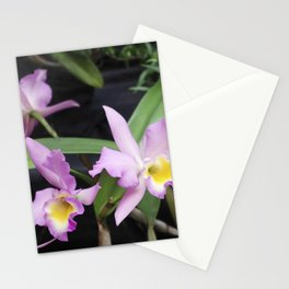 Cattleya Horace Maxima Orchid Stationery Cards