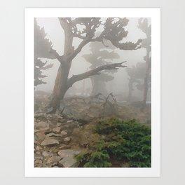 Ancient Bristlecone Pine on Mount Evans, Colorado Art Print