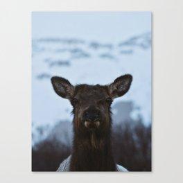 Wild Alaska Canvas Print