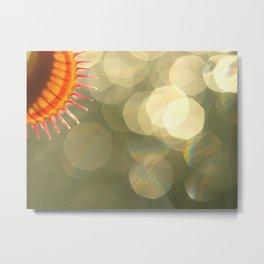Flytrap As The Sun... Metal Print