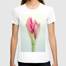Lovely Amaryllis Day 2 T-shirt