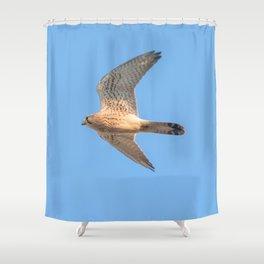 Common Kestrel (Falco tinnunculus). Common Kestrel in flight Shower Curtain