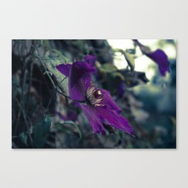 Fading on the Midnight Flower Canvas Print