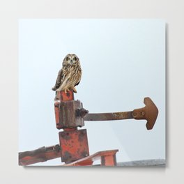 Short eared owl farming Metal Print