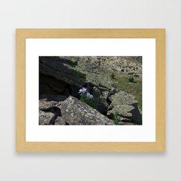 Columbines on a Rock Slide Framed Art Print
