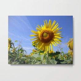 Sunflower - I'm so Pretty Metal Print