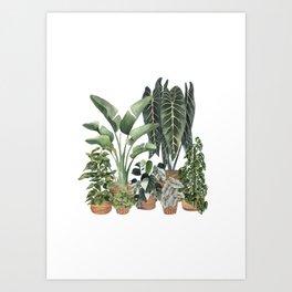House Plants Watercolor Illustration 8 Art Print