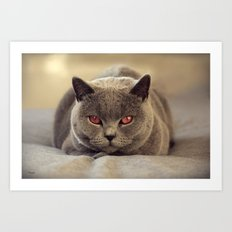 Superstar Diesel the Cat ! Art Print
