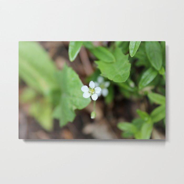 Tiny White Wildflower Metal Print