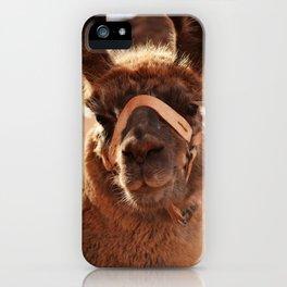 Llama in Cafayate, Argentina iPhone Case