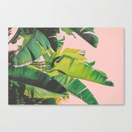 Banana Leaves III (Pink) Canvas Print