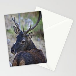 Cervo Sardo Stationery Cards
