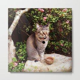 Cat on a Rock Metal Print